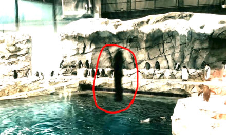 Shocking Alien Footage At The Zoo 9-5-2016