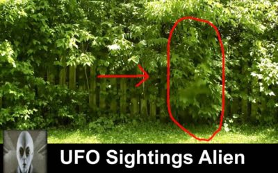 UFO Sightings Alien Spotted On Security Camera